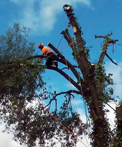 TREE CUTTING OLDHAM